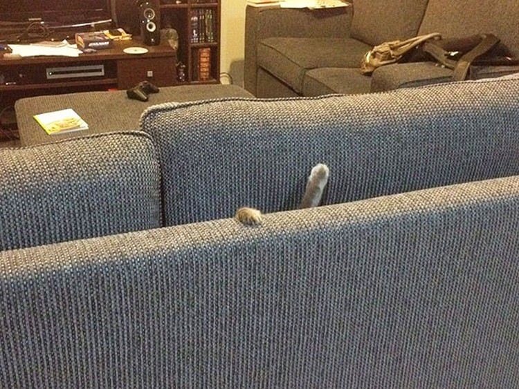 30 Cats Making Poor Life Choices - This cat that won't be hiding in the couch again anytime soon.