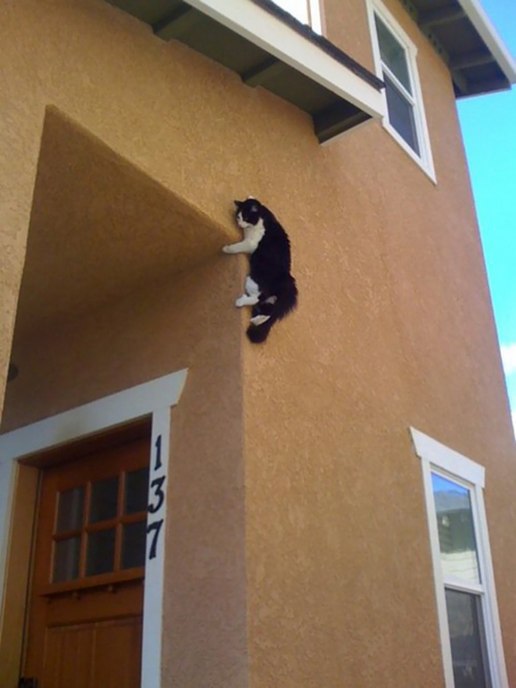 30 Cats Making Poor Life Choices - This ninja cat that's afraid of mice.