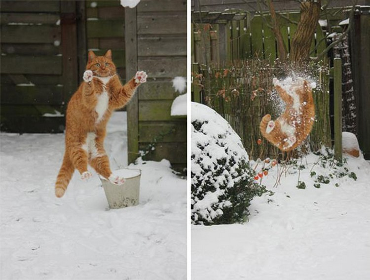 30 Cats Making Poor Life Choices - This cat that thought catching snowballs would be fun.