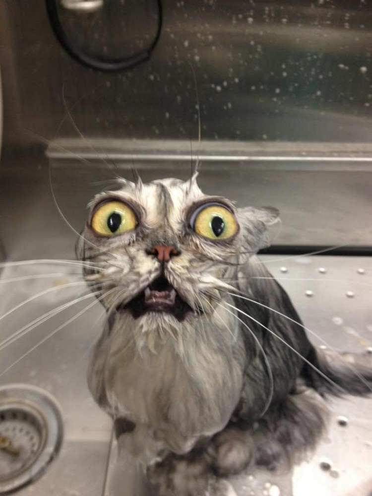30 Cats Making Poor Life Choices - This cat that unknowingly agreed to taking a bath.