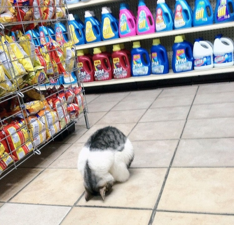 30 Cats Making Poor Life Choices - This cat that regrets going shopping with his human.