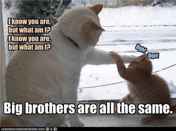 Funny Animal Memes For Adults : Out in a moment funny animal meme