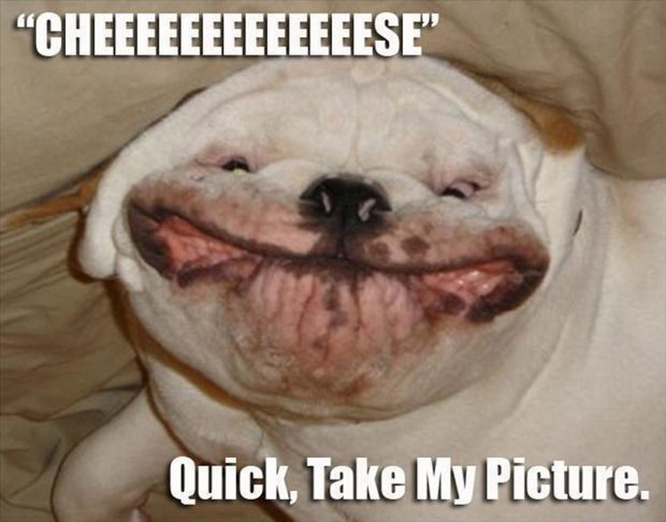 "37 Funny Animal Memes - ""Cheeeeeeeeeeeeese. Quick, take my picture."""