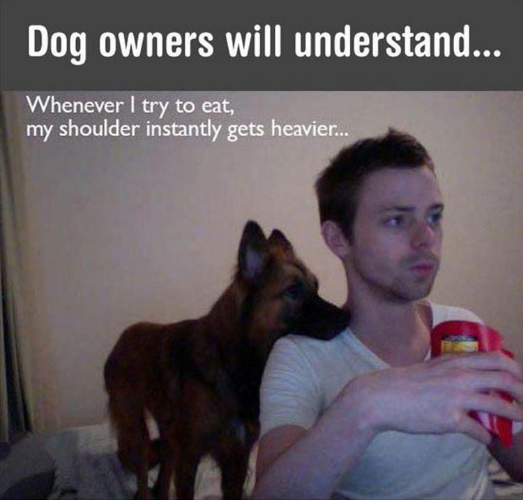 "37 Funny Animal Memes - ""Dog owners will understand. Whenever I try to eat, my shoulder instantly gets heavier..."""