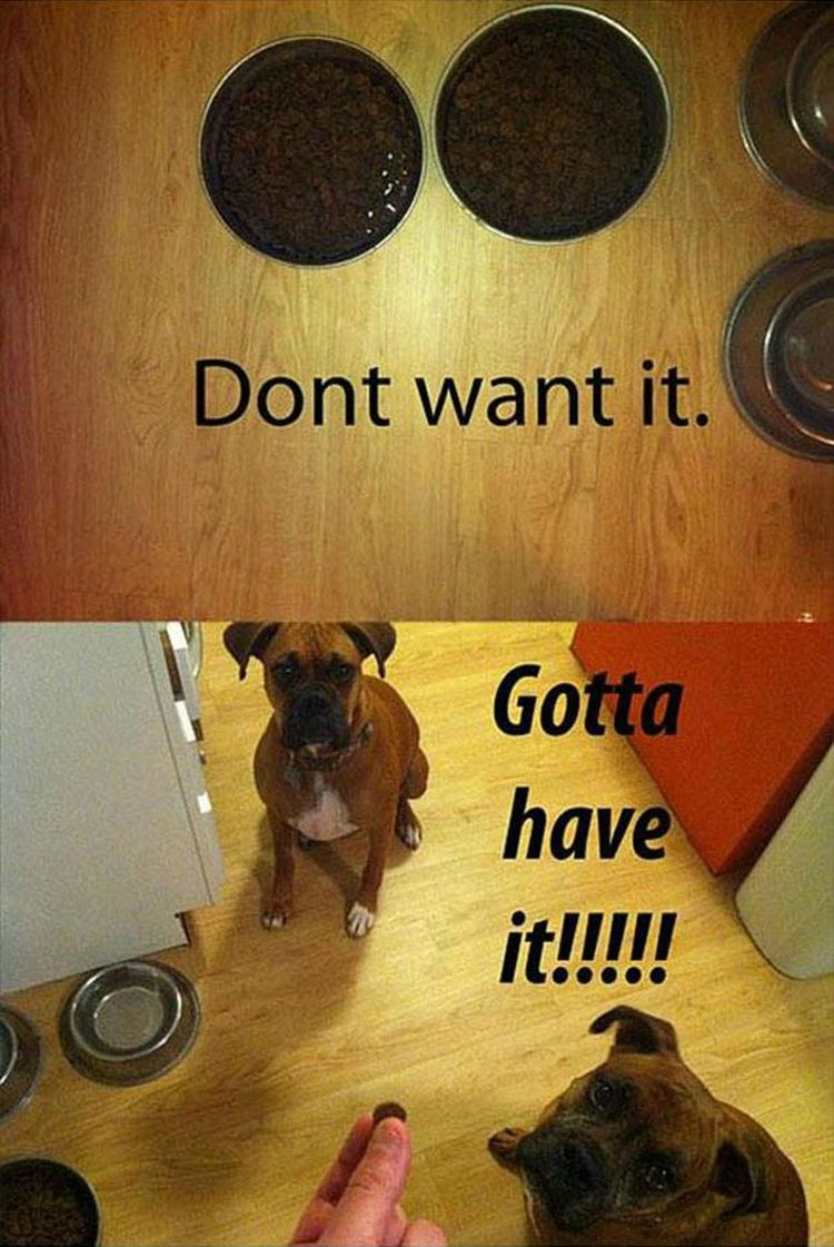 "37 Funny Animal Memes - ""Don't want it. Gotta have it!!!!!"""