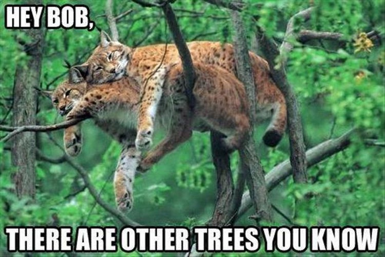 Funny Animal Memes For Adults : Funny animal memes to make you smile stop the boring