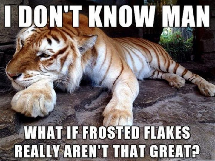 "37 Funny Animal Memes - ""I don't know man. What if Frosted Flakes really aren't that great?"""