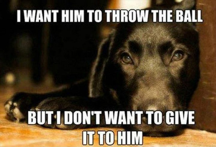 "37 Funny Animal Memes - ""I want him to throw the ball but I don't want to give it to him."""