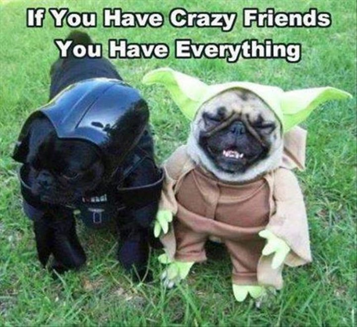 "37 Funny Animal Memes - ""If you have crazy friends, you have everything."""