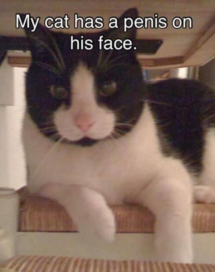 "37 Funny Animal Memes - ""My cat has a penis on his face."""