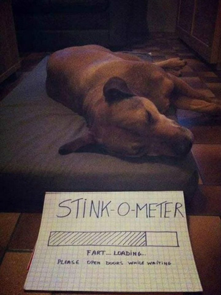 "37 Funny Animal Memes - ""Stink-O-Meter. Fart... Loading... Please open doors while waiting."""