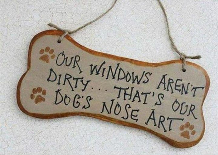 "37 Funny Animal Memes - ""Our windows aren't dirty... That's our dog's nose art."""
