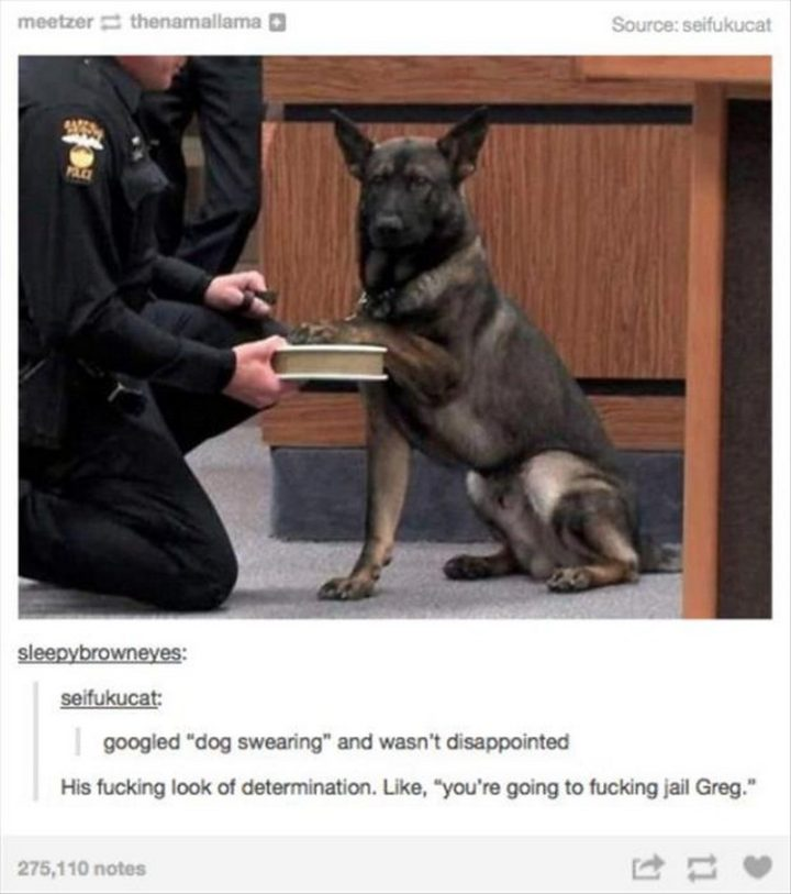"37 Funny Animal Memes - ""Googled 'dog swearing' and wasn't disappointed. His look of determination. Like, 'you're going to jail Greg.'"""