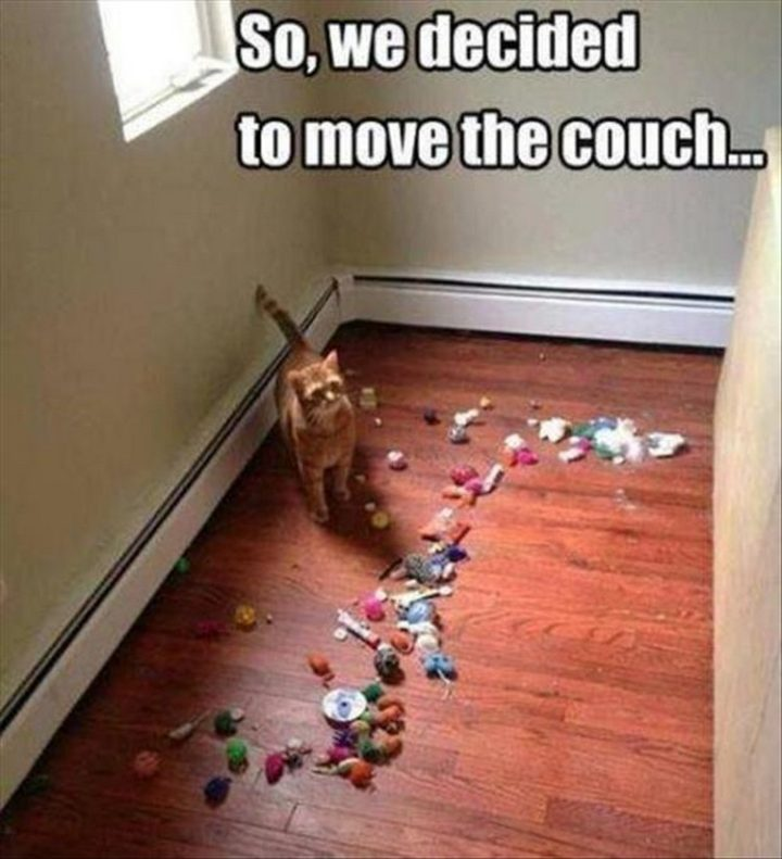 "37 Funny Animal Memes - ""So we decided to move the couch..."""