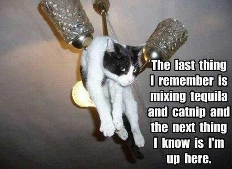 "37 Funny Animal Memes - ""The last thing I remember is mixing tequila and catnip and the next thing I know is I'm up here."""