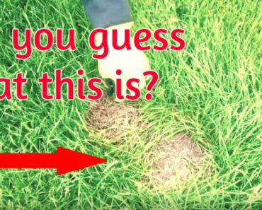 If You Mow Your Lawn and Notice What Looks Like a Dead Patch of Grass, You HAVE to Watch THIS!