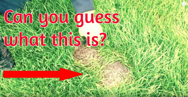 What To Do If You Spot a Baby Rabbit's Nest on Your Lawn