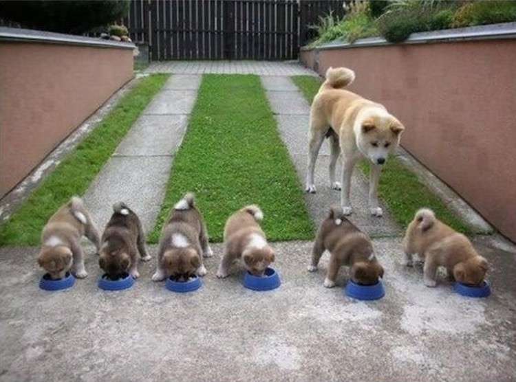 "21 Proud Mommy Dogs - That's a lot of ""doge"" bowls!"