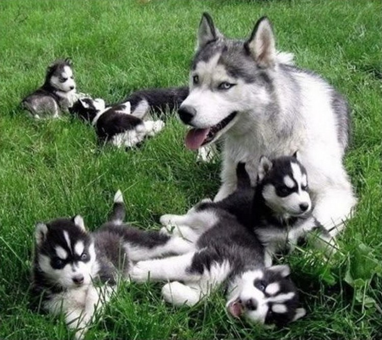 21 Proud Mommy Dogs - So cute.