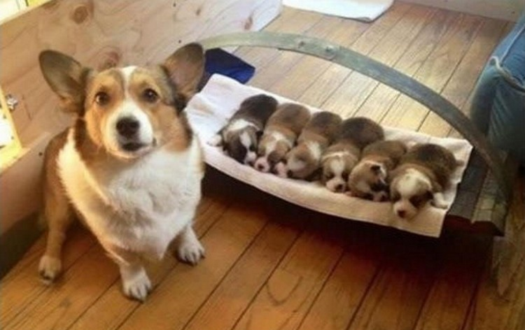 21 Proud Mommy Dogs - I made this!