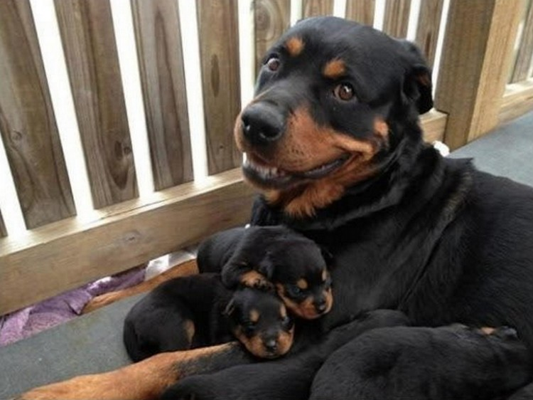 21 Proud Mommy Dogs - Look at that smile! So proud.