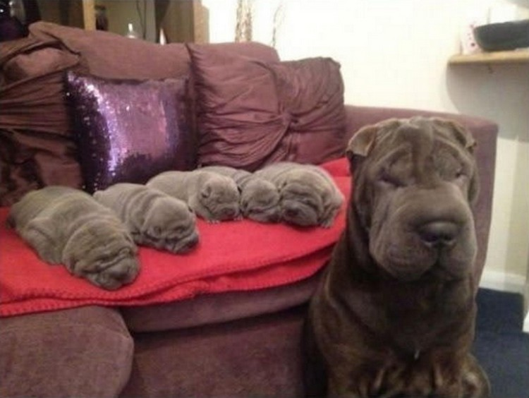 21 Proud Mommy Dogs - This adorably big wrinkle created even cuter little wrinkles!