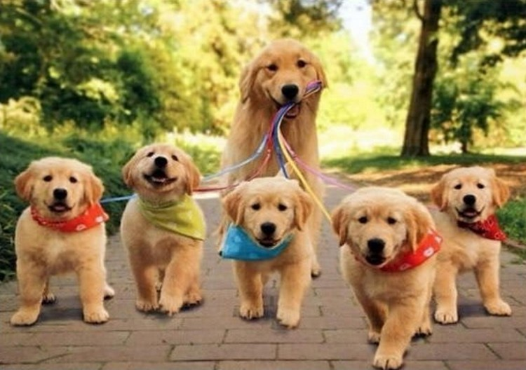 21 Proud Mommy Dogs - Mommy dogs love taking their babies for a walk too!