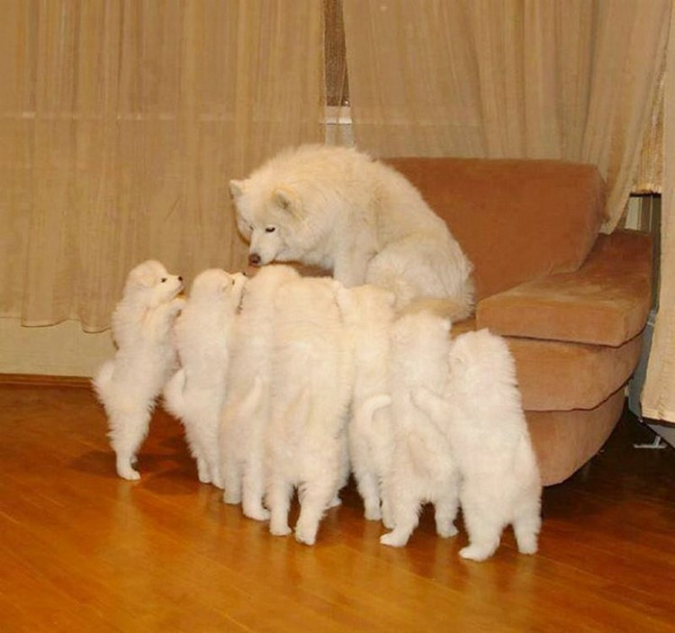 21 Proud Mommy Dogs - Cuteness overload!