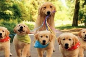 21 Adorably Happy Mommy Dogs and Their Loving Puppies.