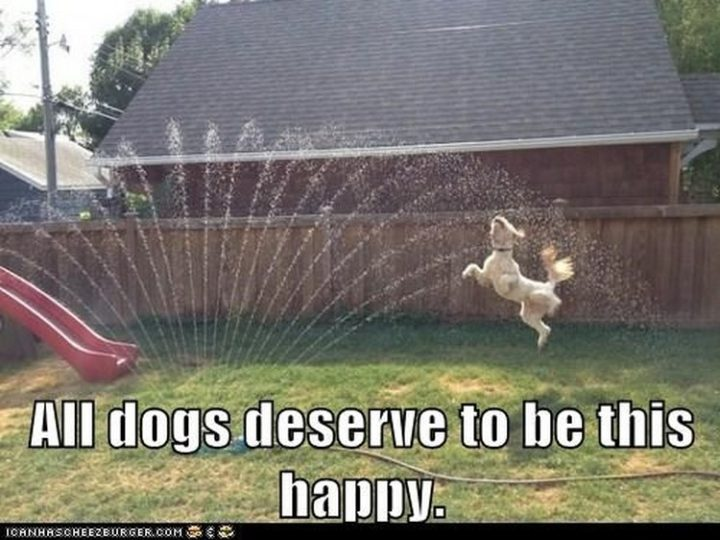 "27 Funny Animal Memes - ""All dogs deserve to be this happy."""