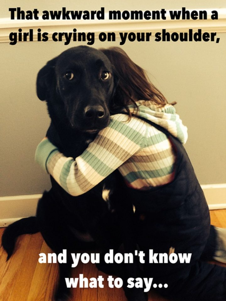 "27 Funny Animal Memes - ""That awkward moment when a girl is crying on your shoulder and you don't know what to say..."""