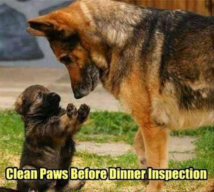 "27 Funny Animal Memes - ""Clean paws before dinner inspection."""