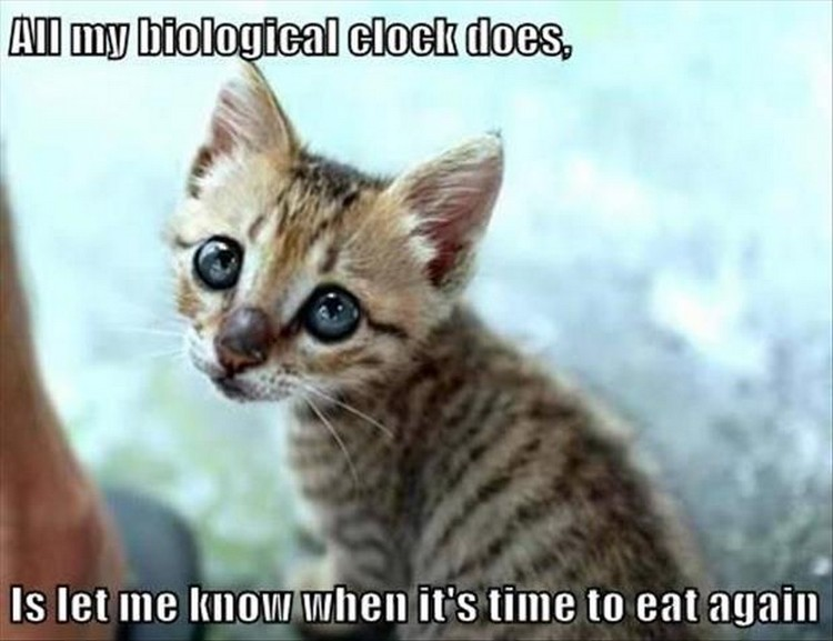 "27 Funny Animal Memes - ""All my biological clock does is let me know when it's time to eat again."""