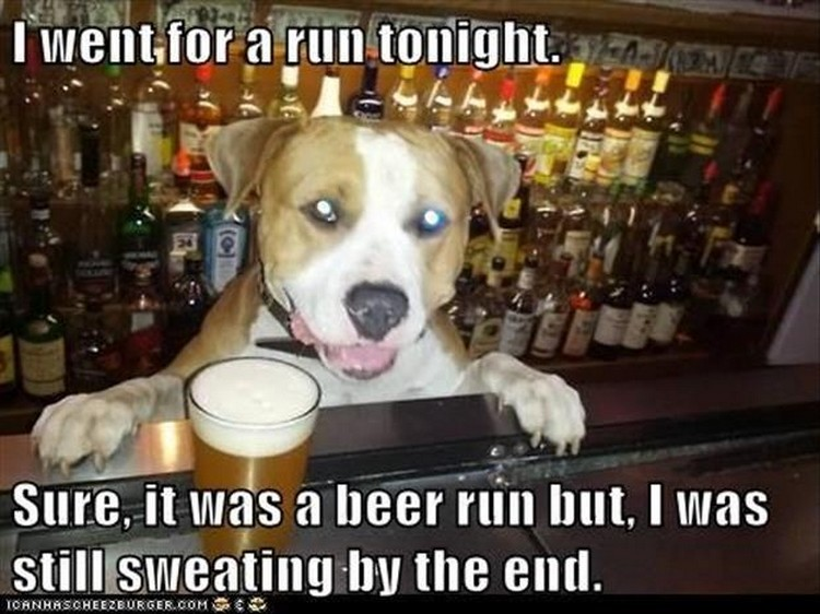 "27 Funny Animal Memes - ""I went for a run tonight. Sure, it was a beer run but, I was still sweating by the end."""