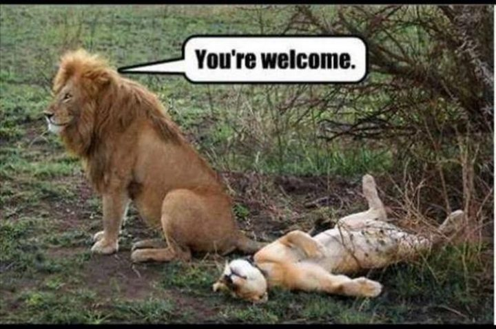"27 Funny Animal Memes - ""You're welcome."""