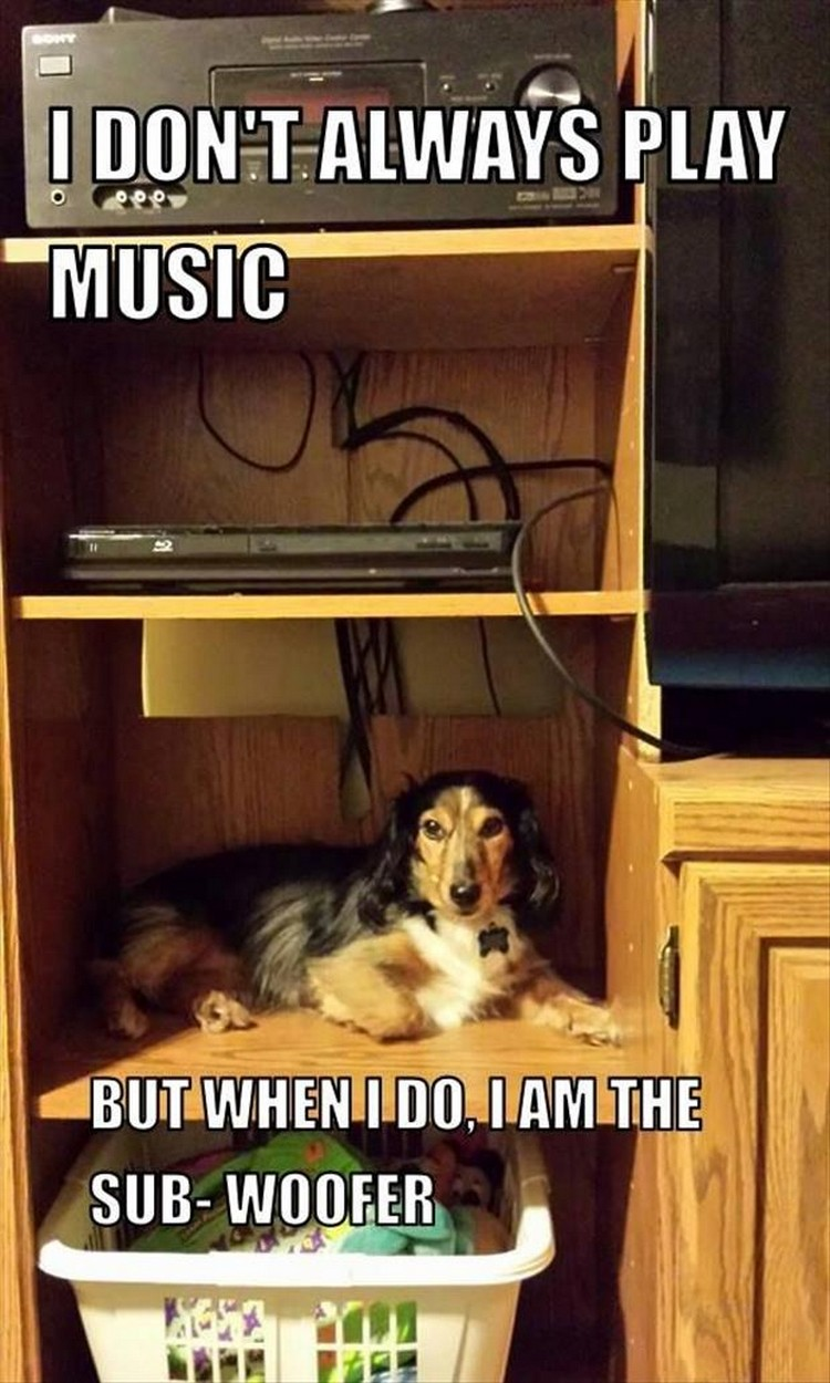 "27 Funny Animal Memes - ""I don't always play music. But when I do, I am the sub-woofer."""