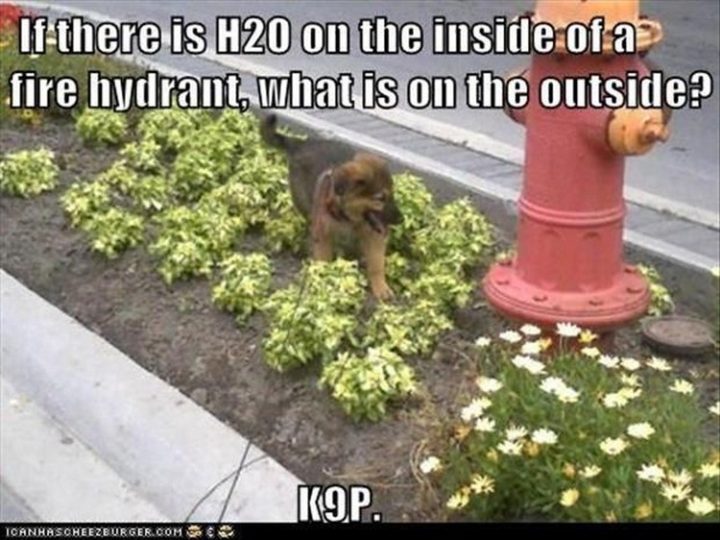 "27 Funny Animal Memes - ""If there is H2O on the inside of a fire hydrant, what is on the outside? K9P."""