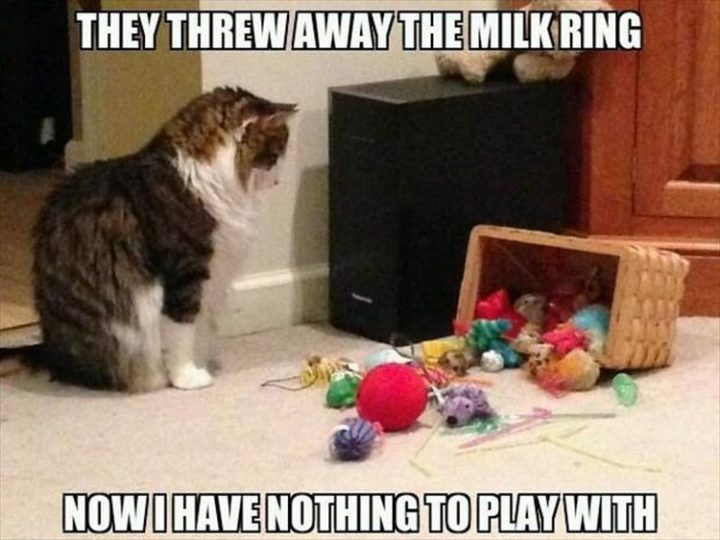 "27 Funny Animal Memes - ""They threw away the milk ring. Now I have nothing to play with."""