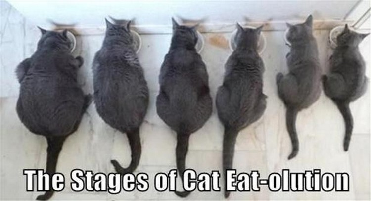 "27 Funny Animal Memes - ""The stages of cat eat-olution."""