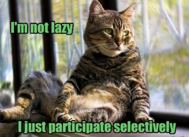 "27 Funny Animal Memes - ""I'm not lazy, I just participate selectively."""