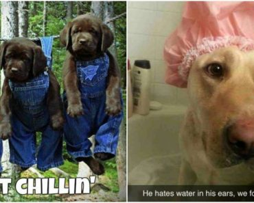 27 Funny Animal Memes That Are Sure to Brighten Your Day.