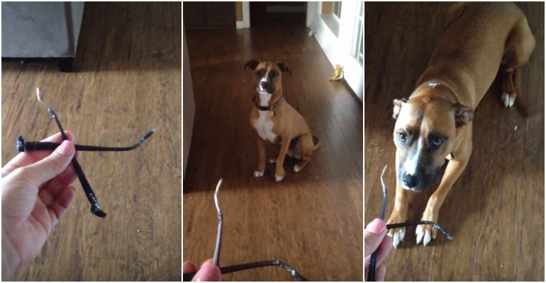 Rooney the Dog Gets Hilariously Busted by His Human.