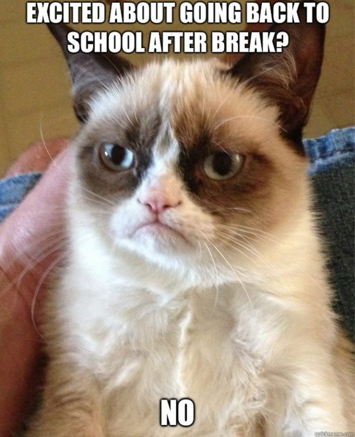 49 Funny School Memes - Your face says it all grumpy.