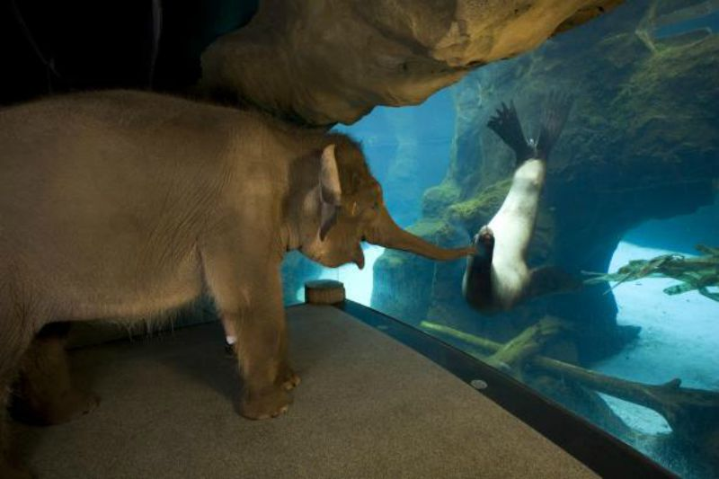 Chendra the Elephant Befriends Gus the Sea Lion at the Oregon Zoo and It Is Adorable!