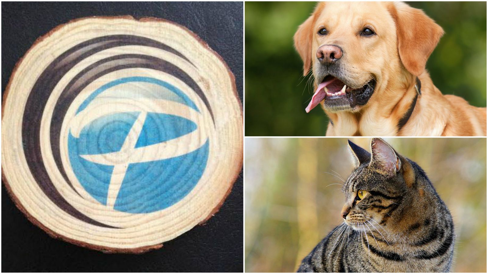Transfer your pet's photo on wood with photo wood plaque coasters.