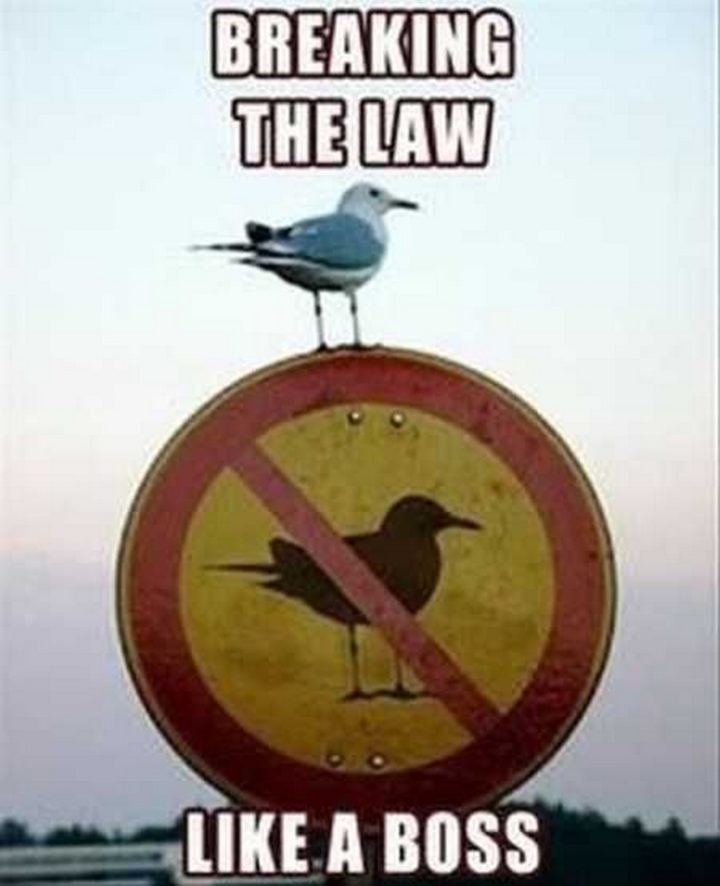 funny breaking the law
