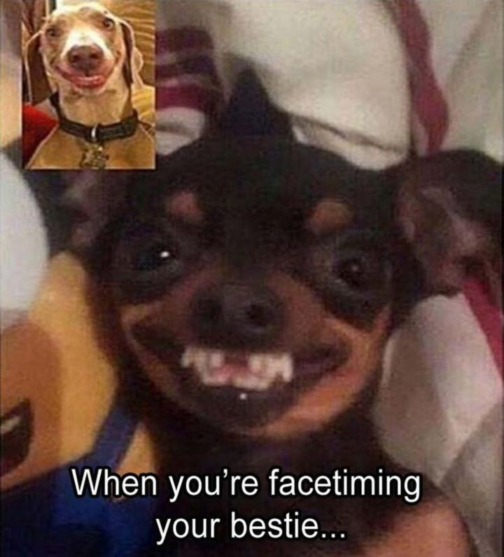 10 Funny Pictures - All smiles.