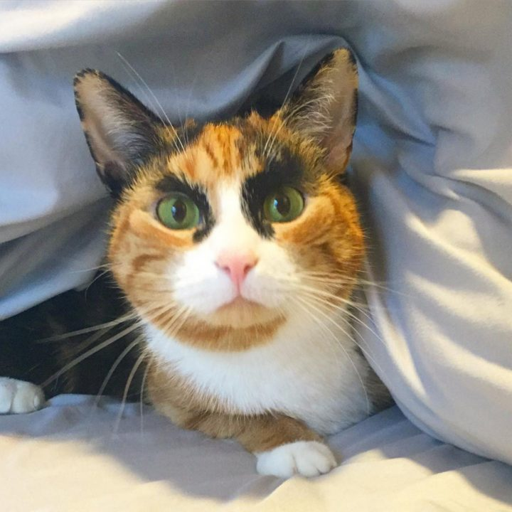 Just like most calico cats, Lilly has beautiful orange, white, and black markings and loves to snuggle.