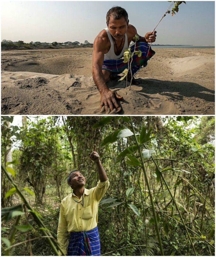 Environmentalist Jadav Payeng began planting trees at the age of 16. 37 years later and many tree plantings later, he has reaped a forest that exceeds 550 hectares. His forest is home to Bengal tigers, rhinos, deer, rabbits, and other animals.