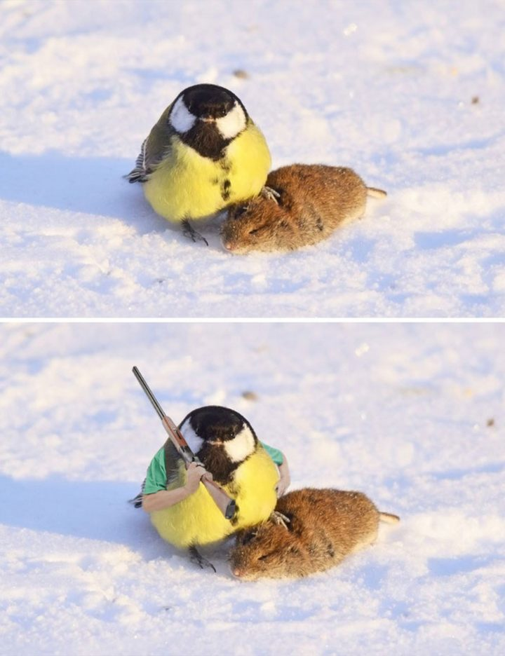 11 Epic Photoshop Battles - A tit (bird) and showing off its prey.